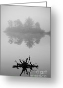 Black Greeting Cards - Driftwood and Lake Greeting Card by Dave Gordon