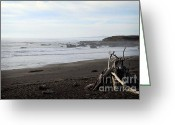 Beaches Greeting Cards - Driftwood and Moonstone Beach Greeting Card by Linda Woods