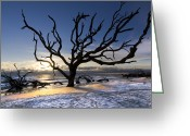 Ghostly Greeting Cards - Driftwood Beach at Dawn Greeting Card by Debra and Dave Vanderlaan