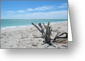 Sanibel Island Greeting Cards - Driftwood Greeting Card by Keiko Richter
