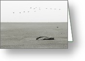 Vista Greeting Cards - Driftwood Log and Birds - A Gray Day On The Beach Greeting Card by Christine Till