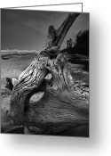 Beach Photograph Greeting Cards - Driftwood on Beach Greeting Card by Steven Ainsworth