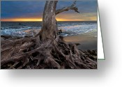 Tides Greeting Cards - Driftwood on Jekyll Island Greeting Card by Debra and Dave Vanderlaan