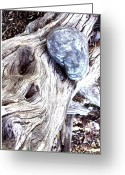 Braches Greeting Cards - Driftwood Greeting Card by Suzanne Fenster