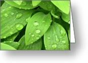 Clean Greeting Cards - Drops On Leaves Greeting Card by Carlos Caetano