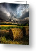 Winter Sun Greeting Cards - Drought Greeting Card by Phil Koch