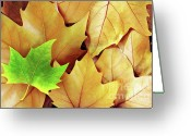 Veins Greeting Cards - Dry Fall Leaves Greeting Card by Carlos Caetano