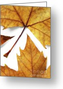 Design Element Greeting Cards - Dry Leafs Greeting Card by Carlos Caetano