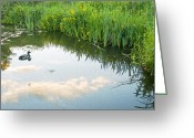 White River Scene Greeting Cards - Duck on a Lake Greeting Card by Svetlana Sewell
