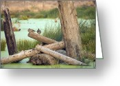 Water Gardens Greeting Cards - Duck Perch Greeting Card by Bonnie Bruno