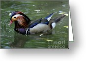 Animal Hunting Greeting Cards - Duck Soup Greeting Card by Diane E Berry