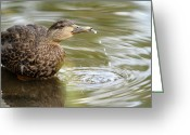 Lake Park Greeting Cards - Duck Spits Greeting Card by Karol  Livote