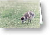 Duckling Greeting Cards - Duckling In Grass Field Greeting Card by Cindy Prins