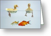 Duckling Greeting Cards - Ducklings and Goldfish Greeting Card by Jane Burton and Photo Researchers