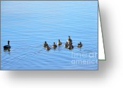 Team Greeting Cards - Ducklings Day Out Greeting Card by Kaye Menner
