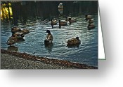 Lake With Reflections Greeting Cards - Ducks on a Lake Greeting Card by Alex AG