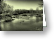 Flood Plain Greeting Cards - Ducks on the South Platte River II Greeting Card by David Patterson