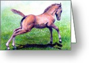 Bay Horse Greeting Card Greeting Cards - Dun Quarter Horse Foal Portrait Greeting Card by Olde Time  Mercantile