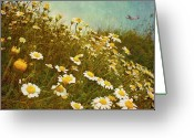 Beginnings Greeting Cards - Dune Daisies Greeting Card by Paul Grand Image