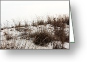 Dune Grass Greeting Cards - Dune Grass at Seaside Greeting Card by John Rizzuto