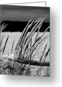 Beach Grass Greeting Cards - Dune Grass in Early Spring Greeting Card by Michelle Calkins