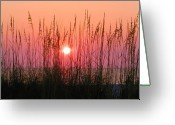 Florida Sunset Greeting Cards - Dune Grass Sunset Greeting Card by Bill Cannon