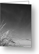 Dune Grass Greeting Cards - Dune Grass with Sky Greeting Card by Michelle Calkins