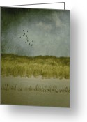 Birds Greeting Cards - Dunes Greeting Card by Joana Kruse