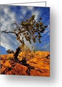 Tree Photo Greeting Cards - Dusk Dance Greeting Card by Skip Hunt
