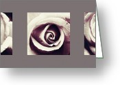 Chic Greeting Cards - Dusk roses Greeting Card by Sumit Mehndiratta