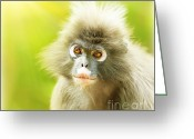 African Animals Greeting Cards - Dusky Leaf Monkey Greeting Card by Anna Omelchenko