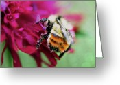 Honey Bee Greeting Cards - Dusted with Pink Greeting Card by Lisa Knechtel