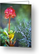 Delicate Bloom Greeting Cards - Dying rocket Greeting Card by David Lade