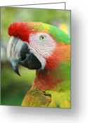 Exotic Bird Greeting Cards - Each New Dawn Greeting Card by Sharon Mau