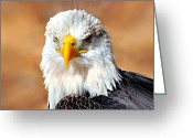 Marty Koch Greeting Cards - Eagle 21 Greeting Card by Marty Koch