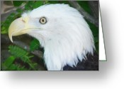 Bald Eagle Digital Art Greeting Cards - Eagle Eye Greeting Card by Bill Cannon