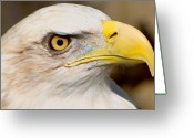 Bald Eagle Digital Art Greeting Cards - Eagle Eye Greeting Card by William Jobes