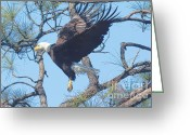 Eagle In Flight Greeting Cards - Eagle Mid Air Greeting Card by Deborah Benoit