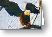 Fighters Painting Greeting Cards - Eagle on a Tree with Dinner Greeting Card by Clarence Alford