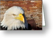 Marty Koch Greeting Cards - Eagle on Brick Greeting Card by Marty Koch