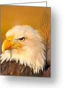 Marty Koch Greeting Cards - Eagle On Guard Greeting Card by Marty Koch
