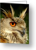 Owl Greeting Cards - Eagle Owl Greeting Card by Photodream Art
