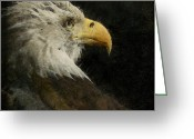 Bald Eagle Digital Art Greeting Cards - Eagle Profile Painterly Square Format Greeting Card by Ernie Echols