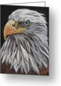 Eagle Pastels Greeting Cards - Eagle Profile Greeting Card by Tracey Hunnewell