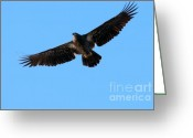 Bird Of Flight Greeting Cards - Eagle Wings Greeting Card by Sharon  Talson