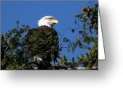 Ken Sjodin Greeting Cards - Eagle14 Greeting Card by Ken  Sjodin