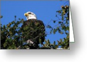 Ken Sjodin Greeting Cards - Eagle15 Greeting Card by Ken  Sjodin