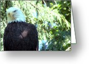 Ken Sjodin Greeting Cards - Eagle20 Greeting Card by Ken  Sjodin
