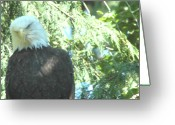 Ken Sjodin Greeting Cards - Eagle21 Greeting Card by Ken  Sjodin