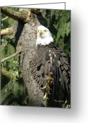 Ken Sjodin Greeting Cards - Eagle30 Greeting Card by Ken  Sjodin